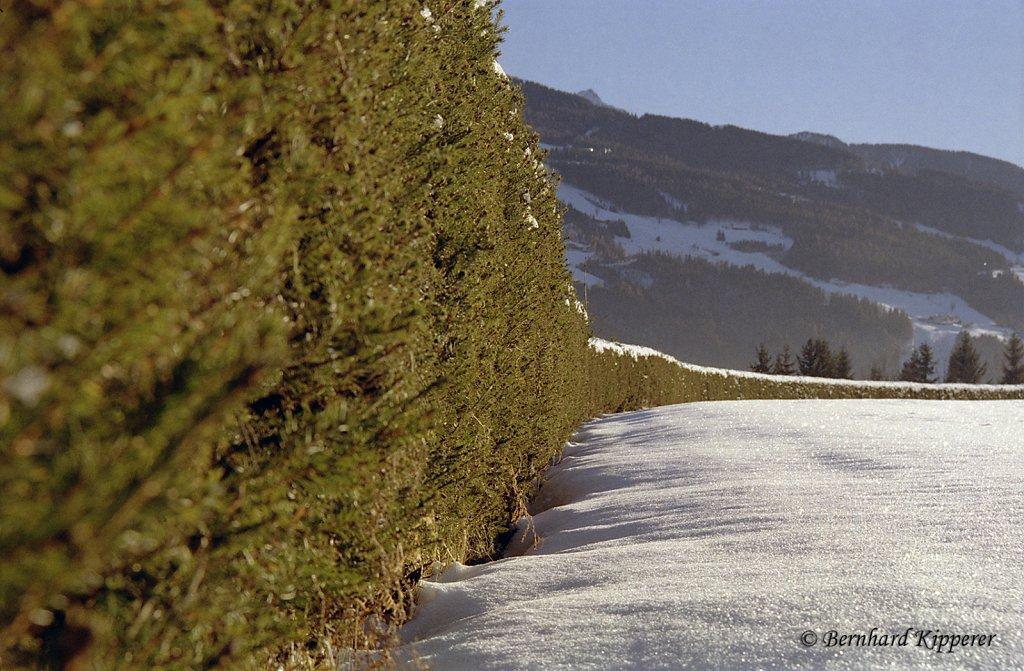 Infinite Hedge